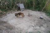 Pies w Wapowcach